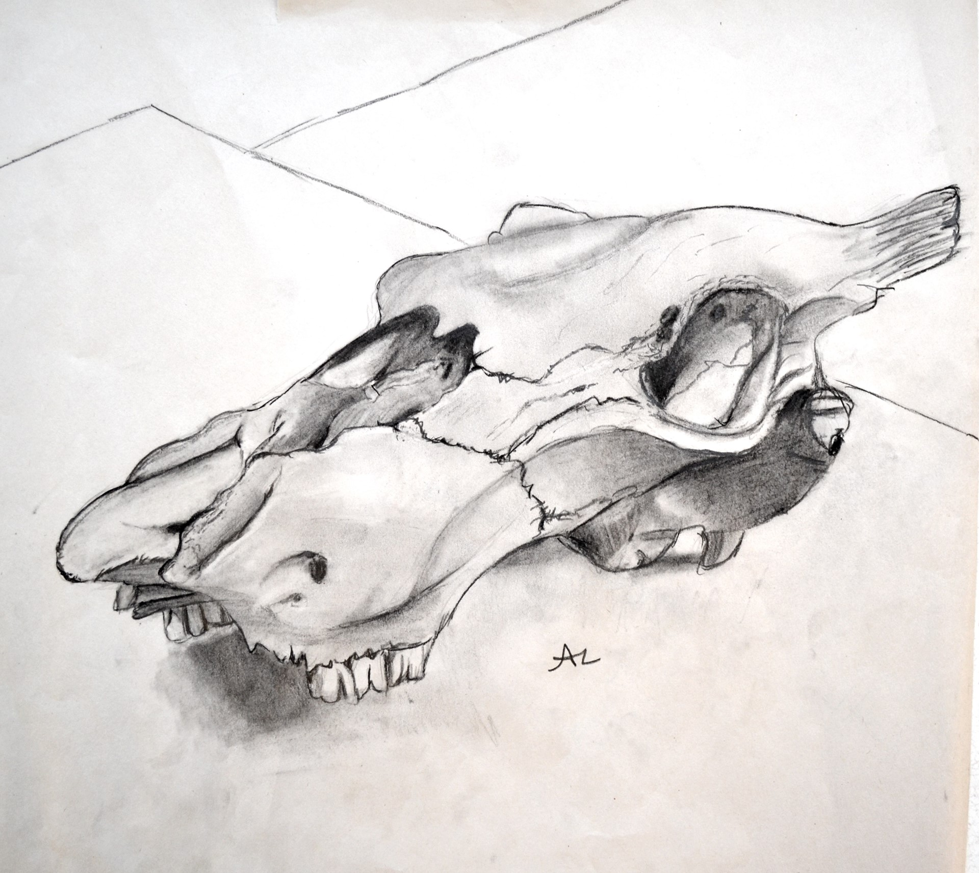 ANGELA LANANNA, Cow Skull, graphite, charcoal, 14 x 15, 2014