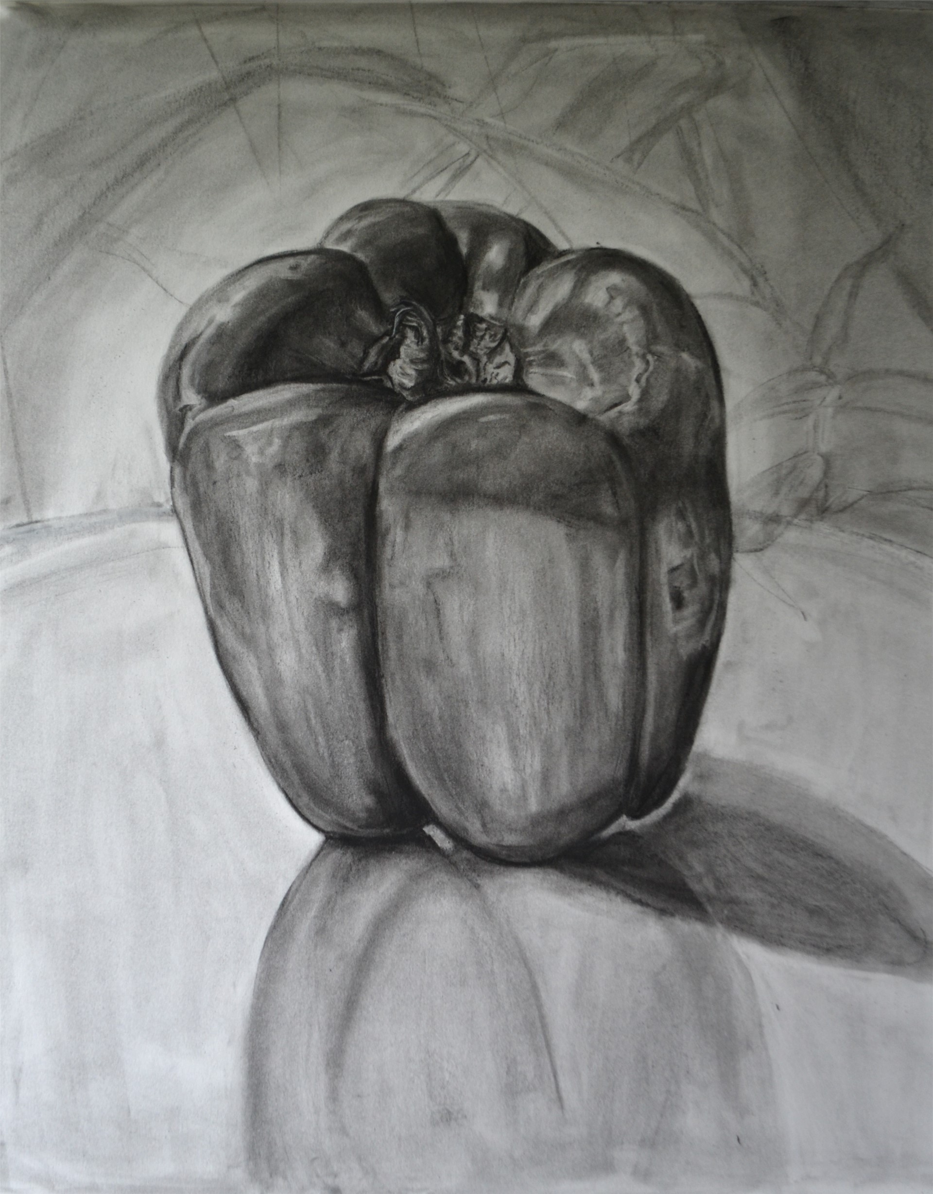 Amanda Rivers, Bell Pepper Study, charcoal on vellum bristol, 25 x 19, 2016