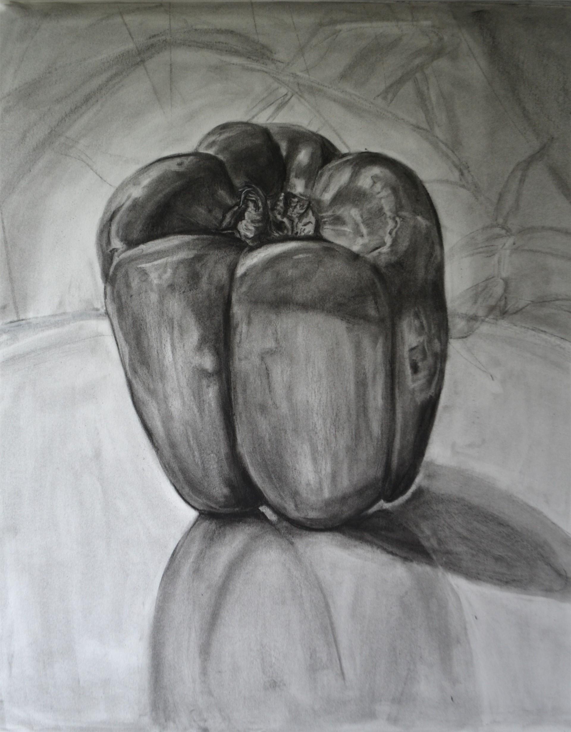 Amanda Rivers, Bell Pepper Study, charcoal on vellum bristol, 25 x 19, 2016