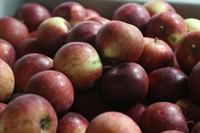 Apples for #BigAppleCrunch