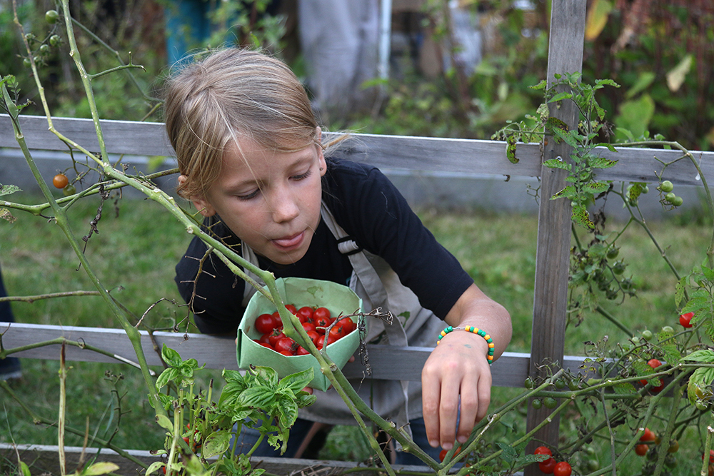 Picking veggies at An Evening in the Garden event